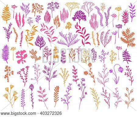 Meadow Flowers, Tree Branches, Algae Water Plants, Corals Isolated On White. Seaweeds Polyps Silhoue