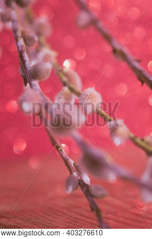 Abstract Natural Soft Pink Background. Blurred Willow Flowers Background. Tender Background. Willow