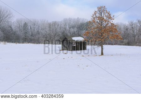 Snow Covered Paddock With Shed And Tree Surrounded By Forest