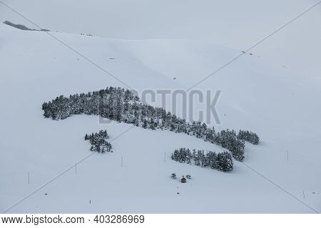 Italy Shape Made By Fir Trees Covered By Snow In The Pian Grande Of Castelluccio Di Norcia, Umbria