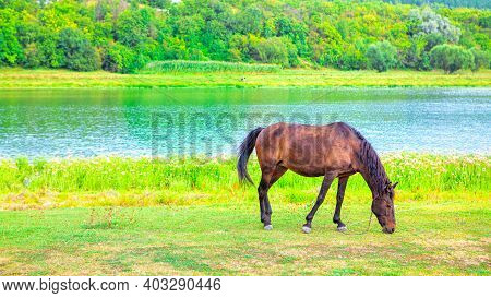 Brown Domestic Horse At The Riverside  . Awesome Scenery With Horse On The Rivers Shore