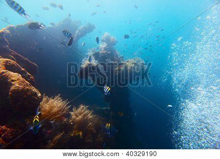 Podvodní střílet USAT Liberty vraku. Tulamben, ostrov Bali, Indonésie