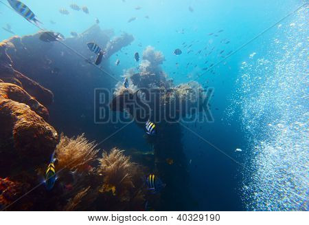 Underwater shoot of USAT Liberty wreck. Tulamben, Bali island, Indonesia