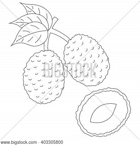 Two Whole And Half Lychees In Black And White