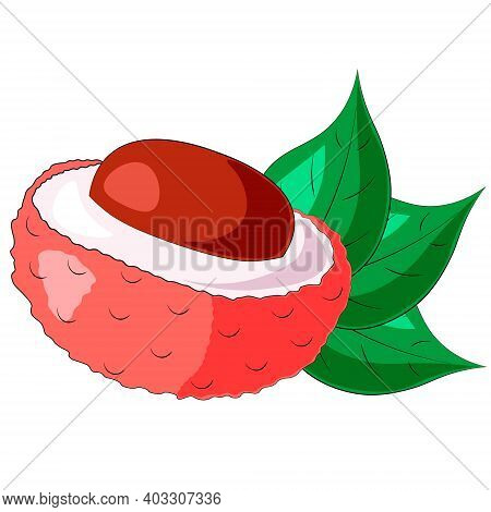 Drawn Fruit Half Lychee And Leaf In Color