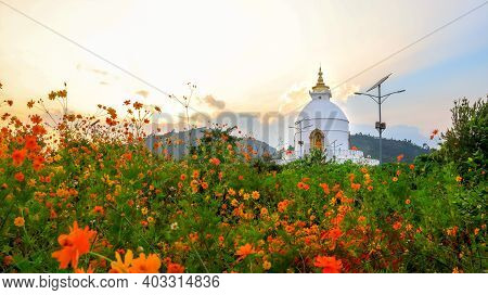 Stunning Golden Hour At World Peace Pagoda In Pokhara, Nepal. Beautiful Orange Flowers Bloom In The
