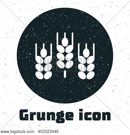 Grunge Cereals Set With Rice, Wheat, Corn, Oats, Rye, Barley Icon Isolated On White Background. Ears