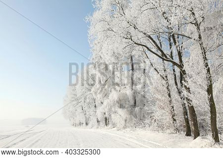 Winter trees forest woods Nature landscape cold Nature background landscape Nature frost snow Nature background Nature landscape Nature landscape Nature background landscape Nature landscape Nature landscape background Nature landscape Nature background.