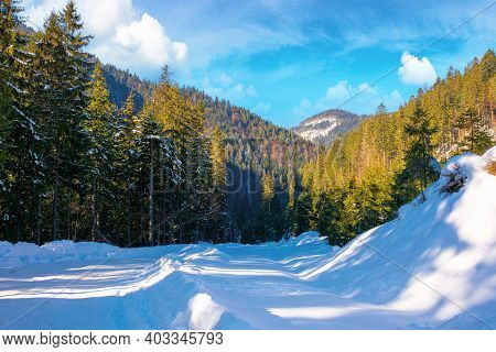 Winter Landscape In Synevir National Park. Beautiful Nature Scenery With Fir Trees Along The Snow Co
