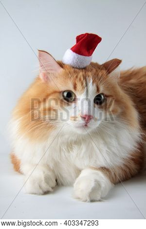 Portrait Of Cute Foxy Cat In Santa Claus Hat Sitting On Light Background