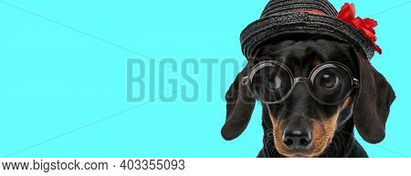 Puppy With Hat Is Pensive With His Glasses