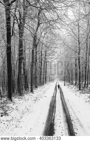 A Person Practicing Sports On A Snow-covered Forest Road. Top View Of The Road In The Woods. Winter