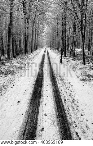 Asphalt Road Covered With Snow Leading Through The Forest. Winter Scenery Shown In Black And White.