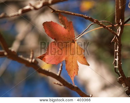 Lone Leaf In The Fall