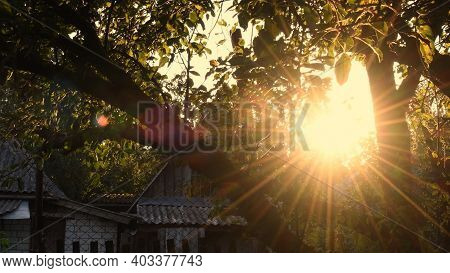 Defocused Star Shape Sun With Golden Shiny Long Rays And Sun Flare Among Tree Branches With Fresh Le