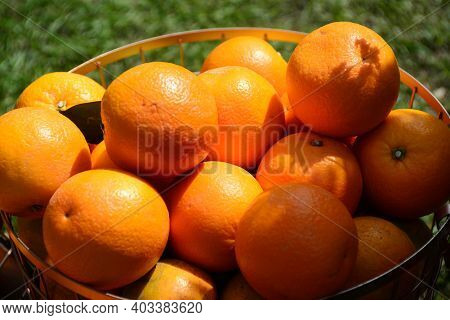 Orange Lobule And Basket With Oranges  On The Green Blurred Background