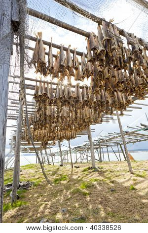 Dried Fish Hanging On A Rorbu In The Lofoten