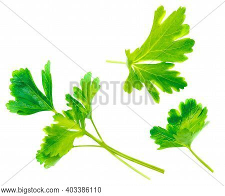Parsley Leaves Isolated On White Background. Fresh Parsley Herb Top View. Flat Lay