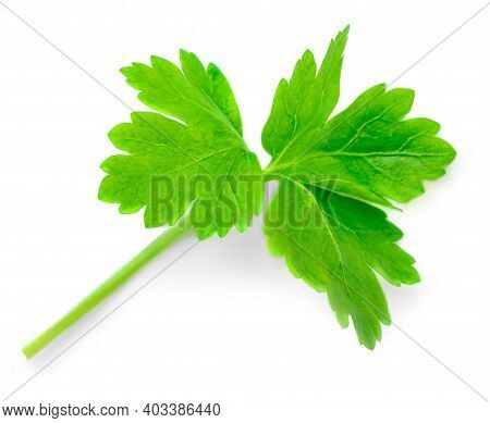 Green Leaves Of Parsley Isolated On White Background, Closeup. Fresh Parsley Herb