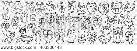 Various Owls Birds Doodle Set. Collection Of Hand Drawn Cute Owls Night Birds Of Various Shapes And