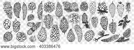 Various Coniferous Cones Doodle Set. Collection Of Hand Drawn Natural Pine And Fir Cones Of Various