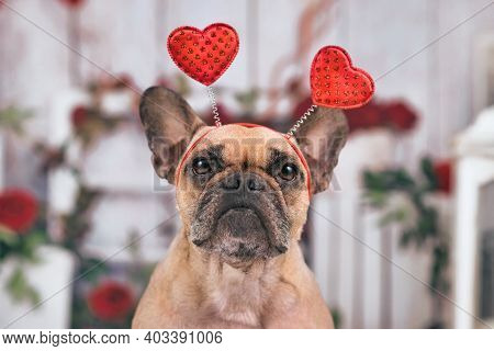 French Bulldog Dog With Valentine's Day Headband With Hearts In Front Of Seasonal Decoration