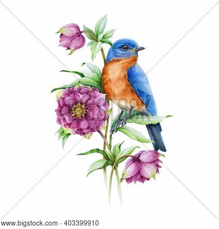Bluebird On Blooming Hellebore Pink Flower Watercolor Illustration. Realistic Floral Spring Image Is