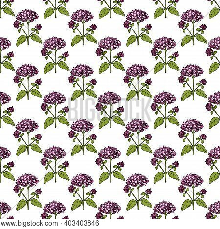 Seamless Pattern With Oregano Flowers And Leaves On White Background. Vector Illustration.