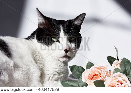Arrogant Funny Black And White Cat With Pink Flowers For Celebtation Design.happy Valentines Day,mot