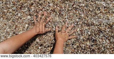 Seawater With Seashells. Womens Hands Take Seashells In Seawater.