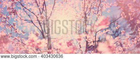 Blurred Sakura Tree Twigs On Blue Background.