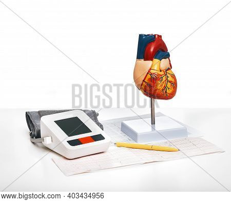 Checking Blood Pressure And Heart Health. Anatomical Model Of The Human Heart And Blood Pressure Ton