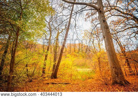 Golden Autumn Colors In The Forest With Colorful Leaves On The Ground In The Fall