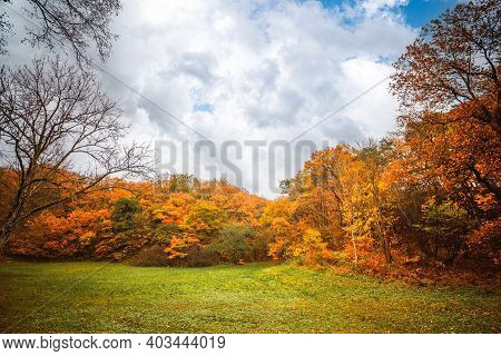 Autumn Colors In The Park With Golden Leaves On The Trees In The Fall