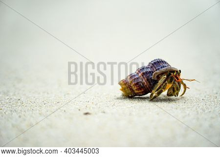 Hermit Crabs That Use Their Shells For Their Habitats Along The Beach.close Up To Hermit Crab On Whi