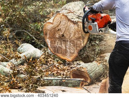 A Landscaper Is Slicing Up A Large Tree Trunk With A Red Chainsaw That Fell On Electric Power Lines