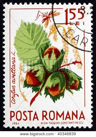 Postage stamp Romania 1964 Common Hazel, Corylus Avelana