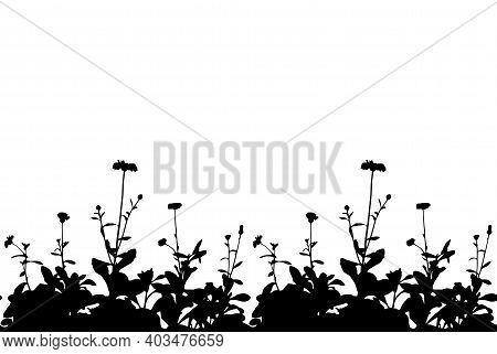 Vector Seamless Pot Marigold (calendula Officinalis) Border Isolated On White Background