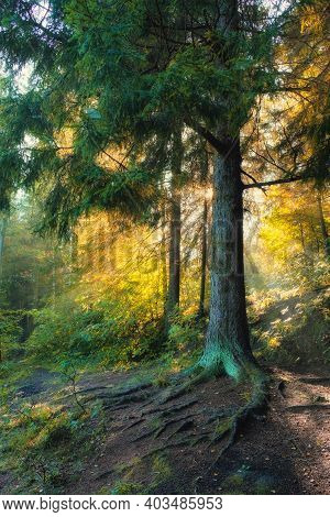 The Sun Rays Shine Through The Haze In The Summer Forest
