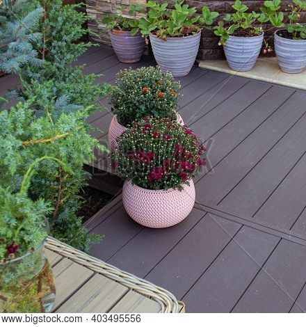 Decoration Of The Terrace And Patio Flowers In Pink Pots. Decorating And Gardening In European Itali