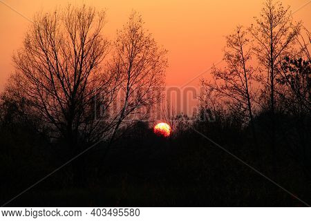 Orange Sunset Over Trees. Orange Sky At Sunset. Twilight With Bright Sunset. Sunny Rays Leaving With