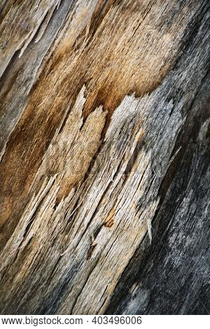 Abstract Background Or Texture Detail Of Multicolored Rotted Wood