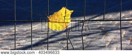 Autumn Yellow Leaf. Symbol Of Loneliness, Melancholy