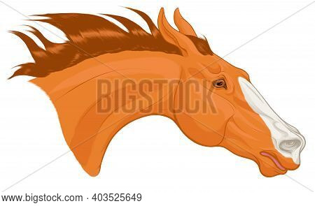 Portrait Of Chestnut Horse Craned Its Neck Forward, Laid His Ears Back. Head Of A Running Steed With