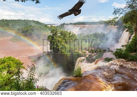 Andean condor  fly over waterfall Iguazu. Grandiose waterfalls Iguazu in South America, on the border of three countries: Brazil, Argentina and Paraguay. Travel concept