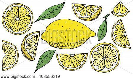 Set Of Lemon Fruits Hand Drawn, Isolated. Yellow Lemon, Slice, Quarter. Design Elements. Vector Illu