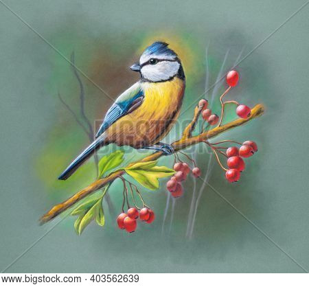Soft pastel painting depicting a blue tit perched on a branch with red berries and leaves. Traditional illustration on paper.