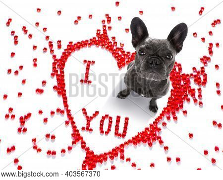 French Bulldog Dog On Valentines Love Heart Shape With I Love You Sign As Background Isolated On Whi