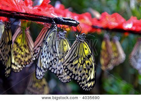 Hanging Paper Kite Butterflies
