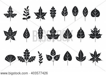 Black Silhouettes Of Tree Leaves. Autumn Leaves Isolated On White Background. Vector Illustration. L